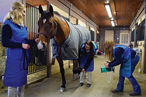 x-raying a horse for animal health - equine pre-vet